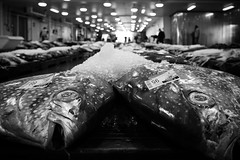 Opah (akarakoc) Tags: honolulu fish auction opah deepsea moonfish sunfish kingfish redfin ocean pan eye fujifilm x monochrome black white ice hawaii