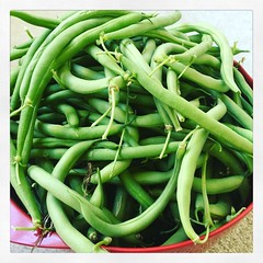 First Bean Harvest (matthewkaz) Tags: instagramapp square squareformat iphoneography uploaded:by=instagram clarendon beans greenbeans garden homegrown food home house burcham eastlansing michigan 2016