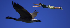 Animals In Flight (swong95765) Tags: goose flight flying boy kid leap sky airborn wings faith aloft