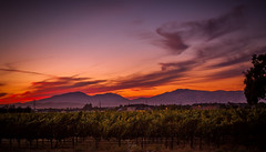 A Warm Sunset (Rohit KC Photography) Tags: livermore sunset vineyard winery ca california canon canon5dmarkii canon24105mmf4l nature natural warm usa sky cloud hills evening dusk landscape lightroom