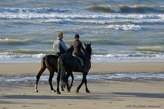 Belgian coast (Natali Antonovich) Tags: belgiancoast northsea sea water parallels portrait horse horses horseman horsemen lifestyle tradition relaxation wenduine heandshe seasideresort seashore seaboard seaside beach