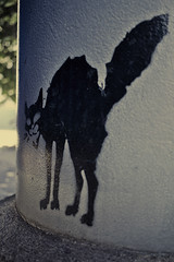 ChatNoir_8744 (cocolokoproducciones) Tags: graffity tags streetart urbanart chatnoir blackcat