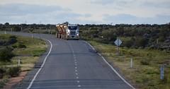 Mack Tippers (quarterdeck888) Tags: trucks transport roadtransport haulage lorry class8 tractortrailer overtheroad heavyhaulage australianroadtransport nikon d7100 semitrailer frosty quarterdeck flickr jerilderietrucks jerilderietruckphotos truckphotos australiantruckphotos expressfreight freight roadfreight truck mack tippers roadtrain tridolly sidetippers