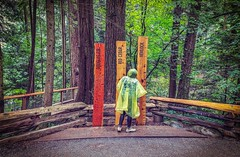 How Tall (Old) Are They - Vancouver, Canada (, ) (dlau Photography) Tags: vancouver canada   woodplank    douglasfir  redcedar   hemlock  travel tourist vacation visitor people lifestyle life style sightseeing   trip   local   city  urban tour scenery   weather   outdoor   astoundingimage