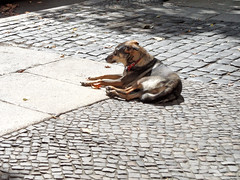 Straenkter (onnola) Tags: berlin kreuzberg deutschland germany graefekiez hund dog brgersteig pflaster pavement