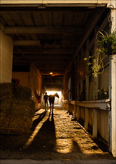 Silhouettes in the Barn (45339) (Kurt Kramer) Tags: arlingtonpark horse silhouette silhouettes goldenhour sunlight thoroughbred racehorse hay barn