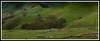 Strath (jumpermatrix) Tags: hils magical beauty victoria melbourne australia trees wood log tracks mountains scerinty pitures love country lifestyle life bike fence strath creek clouds fog picnic grass green die wildlife rocks farm sheepfarm sensational