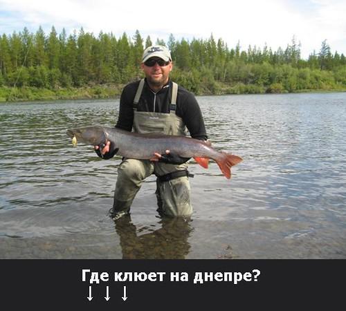 где ловят тайменя во  россии