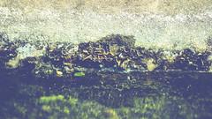 imagined cliff (adamthecholo) Tags: macro water algae green