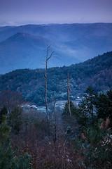 PhoTones Works #2206 (TAKUMA KIMURA) Tags: trees winter plant nature leaves clouds landscape       kimura    takuma   rx100 photones