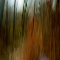 Moving through the Woods (Karen McQuilkin) Tags: abstract motion blur hike impressionist icm uath intentionalcameramovement karenandmc movingthroughthewoods