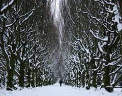 Endless winter (Ingrid0804) Tags: trees winter snow day path endlesswinter 100commentgroup ruby5 rememberthatmomentlevel1