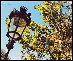 IMG_4420 (Capitn pan) Tags: barcelona espaa verde azul hojas farola negro edificio cielo rbol mygearandme rememberthatmomentlevel1 rememberthatmomentlevel2