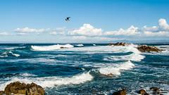 Asilomar State Beach (a.k.a. Flash) Tags: california beach surf waves pacificgrove asilomar 2012 whitecap