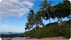 Makena Cove (mnarrowe) Tags: plant tree beach landscape hawaii maui palmtree makena makenacove