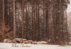 White Christmas  **EXPLORE** (Vicki Lund Photography) Tags: christmas family trees winter white snow nature beautiful blessings woods nikon raw friendship natural maine cancer newengland naturallight explore thankful northamerica 2012 snowcoveredtrees colorsnatural wwwvickilundphotographycom httponfbmevickilundphotographywelcome