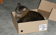 Fuzz in the Box (blazer8696) Tags: usa cat unitedstates box connecticut ct canton fuzz 2012 collinsville ecw t2012