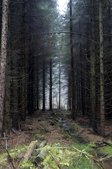 An Avenue of Trees (mark_fr) Tags: new beer robin waterfall inn tit erithacus yorkshire great ale pale brewery coal nuthatch bitter cropton lager chaffinch the fringilla coelebs ater europaea rubecula sitta keldy periparus
