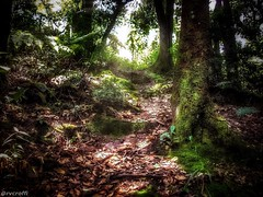 Pico do Jaragu - So Paulo (rvcroffi) Tags: brazil plant tree verde green planta nature beautiful brasil forest landscape amazing sopaulo awesome natureza paisagem pico floresta mata hdr hdri trilha jaragua fechada