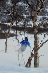 Through the trees (Kjetil S.) Tags: mountain ski norway skiing backcountry troms srreisa