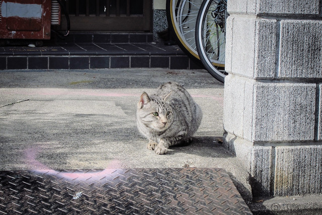 Today's Cat@2013-01-03
