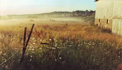 daisys and field dew (e.r. stevens) Tags: morning mist field barn pennsylvania dew daisy morningdew electricfence walmartfilm canoneosrebelk2 haybarrel