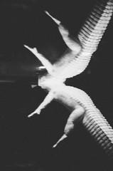 claude (dmedal) Tags: sanfrancisco blackandwhite reflection film analog personal kodak gator albino claude float epic olympusstylus
