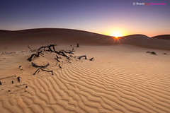 Oman - Sunrise at Wahiba Sands (Beauty Eye) Tags: nightphotography night photoshop sunrise canon rebel exposure outdoor dunes down scene sands tamron oman lightroom t3i cameraraw ultrawideangle     600d  nauticaltwilight  beautyeye 1024mm astronomicaltwilight ashsharqiyah bidiyah canon600d   tamronspaf1024mmf3545diiild  rebelt3i kissx5 sunrisedown canon600deos omanomancountry omanbidiyah