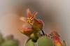 flower and buds (susodediego ) Tags: flower macro fleur flor blume fiore soe цветок thegalaxy nikond300 simplysuperb olétusfotos sigma150mmf28exdghsm ringexcellence flickrstruereflection1 rememberthatmomentlevel4 rememberthatmomentlevel1 rememberthatmomentlevel2 rememberthatmomentlevel3 infinitexposure