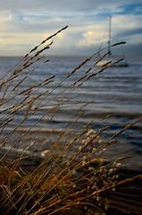 Seaside grass (tayl0439) Tags: sunset sea water grass clouds sailboat seaside waterfront sail grasses essex bradwell bradwellonsea