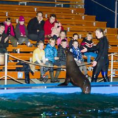 Ouwehands Dierenpark - Zeeleeuwenshow-2526 (Quistnix!) Tags: show netherlands zoo nederland sealion rhenen ouwehands dierenpark zeeleeuw zeeleeuwen 2013 dierenparkouwehands zeeleeuwenshow ouwehandszoo