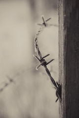 Barbwire (DavidAndersson) Tags: wood winter snow cold monochrome wire frost sweden vnersborg tamron18200f3563 barded taggtrd