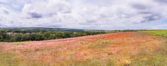 The North York Moors (petespande) Tags: northyorkmoors nikond750 20mm18 heather visitengland wideangle panorama