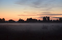 Sunrise (careth@2012) Tags: sunrise landscape scenery scenic scene view mist misty trees wilderness nature farmland atmosphere atmospheric grass tranquil tranquility serene serenity