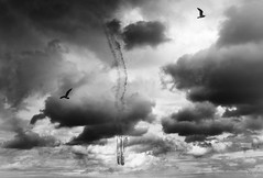 When the Birds Fly (rjseg1) Tags: chicago airshow northavenue aerobatics flying gulls