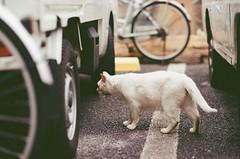 4632016/06/25 (Natsuki_y) Tags: film filmphotography kodak iso200 cats cat straycat tokyo canon eos1n 85mm