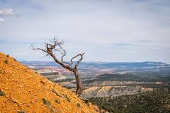 Deadwood (Serendigity) Tags: brycecanyonnationalpark deadwood outdoors usa unitedstates landscape utah nature