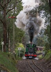 Grade (Dobpics O'Brien) Tags: pbr puffingbilly pbps puffing billy cockatoo victorian victoria vr rail railway railways steam train engine locomotive gembrook 6a