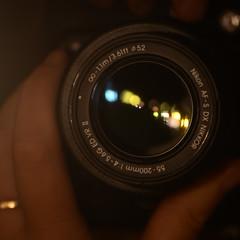 mood lights (Scilla sinensis) Tags: fs160918 fotosondag stmning stamning