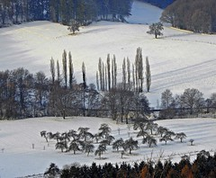 .Winterlandschaft (© the-best-is-yet-to-come ©) Tags: abigfave dragondaggeraward