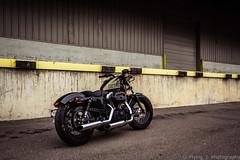 Grungy pt 2 (B Photography TX) Tags: bike gold ride stadium harley warehouse motorbike harleydavidson motorcycle 1200 hd junkyard scrapyard davidson xl sportster scoot 48 hardcandy goldflake