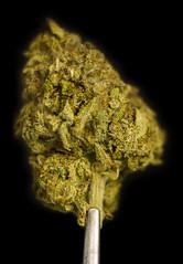 LbGhi (Symic) Tags: plant green leaf stem weed cured 420 oil hash cannabis dank butane bho afghani andrswilliamolsenrodriguez