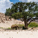 """Desert Adapted Elephant on Ephemeral River, Namibia • <a style=""""font-size:0.8em;"""" href=""""https://www.flickr.com/photos/21540187@N07/8292848842/"""" target=""""_blank"""">View on Flickr</a>"""