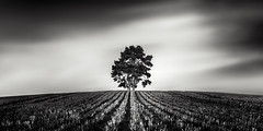 tree (richard carter...) Tags: blackandwhite tree monochrome kent solitude lonetree canoneos5dmk2
