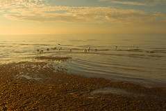 Mentone Beach (John Parkinson) Tags: morning seagulls seascape seaweed beach gulls mentone