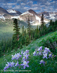 Columbine Along the Trail to Arapaho Pass (Glenn Randall) Tags: flowers trees summer plants mountains vertical clouds season landscapes peace meadows peaceful valley 4x5 format columbine wilderness peaks orientation scenics valleys concepts i gprandall inp01 inp01gr012005 prostocknumber