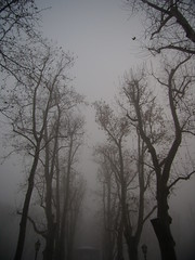 enchanted park (Bambola 2012) Tags: park trees winter fog grey croatia spooky enchanted