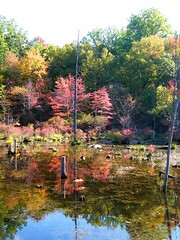Flooded Forest (Stanley Zimny) Tags: autumn reflection fall forest flooded 1114