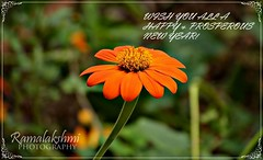 NEW YEAR WISHES (Ramalakshmi Rajan) Tags: flowers flower nikon wishes nikond5000