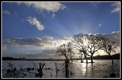 Westhay Moor (CliveDodd) Tags: somerset moor levels floods westhay